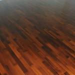 akacja parzona